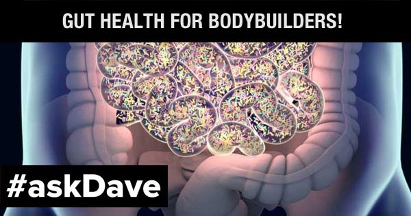 gut health for bodybuilders